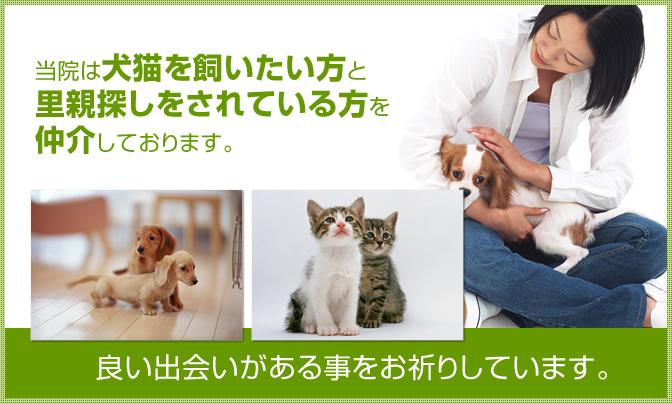 当院は犬猫を飼いたい方と里親探しをされている方を仲介しております。